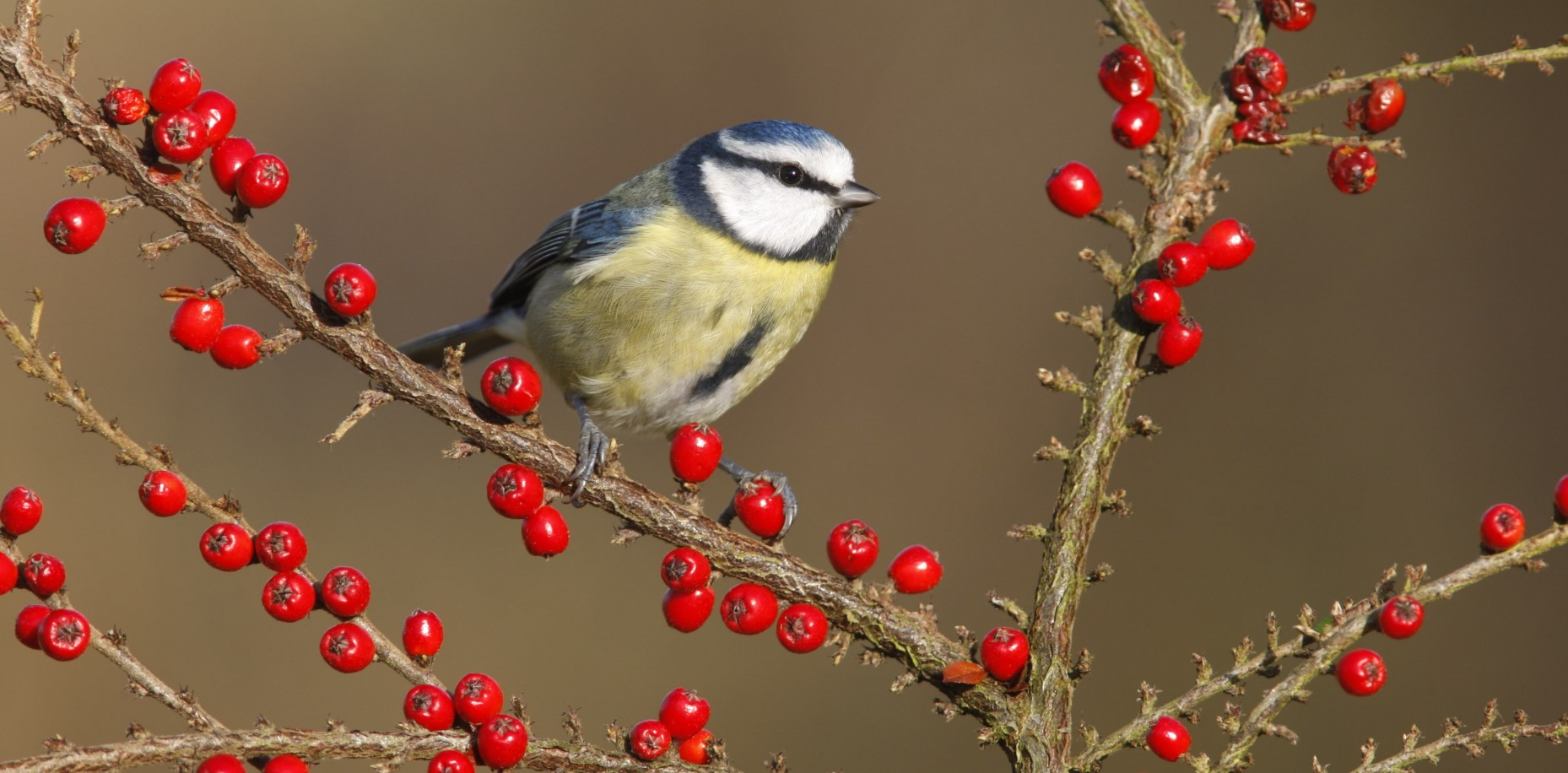 We're joining in this weekend with the RSPB Big Garden Birdwatch